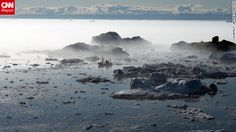 A fishing boat finds its way through icebergs and fog off the coast of Ilulissat, Greenland. #monogramsvacation
