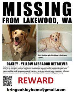 https://www.facebook.com/pages/Help-Find-Oakley/283805531761221