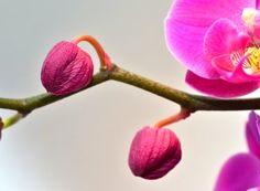 Rostopasca și binefacerile ei fără număr   Paradis Verde Paradis, Salvia, Joy, Floral, Design, Interiors, Green, Plant, Sage
