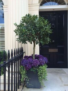 Beautiful topiary front door planter with hydrangeas Front Door Plants, Front Porch Flowers, Front Porch Planters, Bay Tree Front Door, Front Of House Plants, Porch Topiary, Outdoor Topiary, Front Verandah, Front Porches