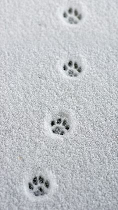 Little paw prints in the snow. - - Little paw prints in the snow. Little paw prints in the snow. I Love Winter, Winter Snow, Winter Time, Winter Christmas, Winter Cat, The Snow, Dog In Snow, Winter Magic, Winter Beauty
