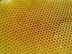 Honey combs. Patterns in nature.