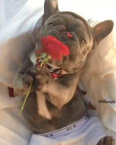 Happy Valentine's day,Funny, Funny Categories Fuunyy Happy Valentine's day Source by Jantoes. Funny Animal Videos, Cute Funny Animals, Cute Baby Animals, Funny Dogs, Animals And Pets, Cute Puppies, Cute Dogs, Cute Babies, Happy Valentines Day Funny