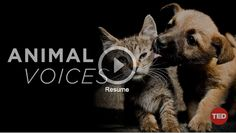 TED TALKS ANIMAL VOICES