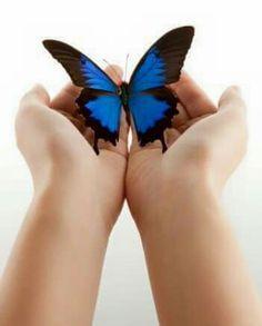 92 Mejores Imágenes De Mariposas Azules Y Algo Más