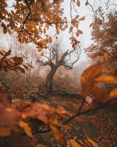 "3,744 Likes, 210 Comments - Andrey BelavinMoscow (@ted.ns) on Instagram: ""Beech forest at Demirji mountain Путешествие в Крым совпало с волшебным периодом, когда осень…"""