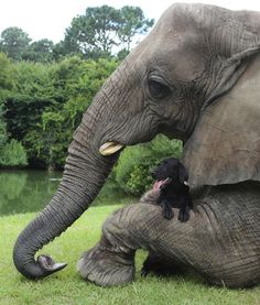 Dog with his elephant friend.