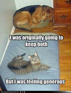 cat dog humor