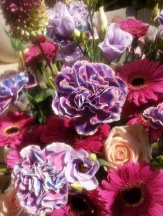 Dianthus met fuchsia  kleuren