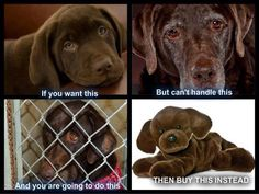 Funny pictures about Dogs Are Not Disposable. Oh, and cool pics about Dogs Are Not Disposable. Also, Dogs Are Not Disposable photos. Tier Fotos, Pet Store, Animal Rescue, Animal Adoption, Rescue Dogs, Pet Adoption, Shelter Dogs, Shelters, Puppy Love