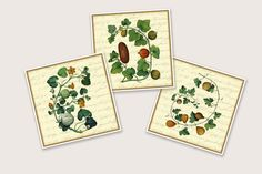 Gallery Wall Botanical Art Set of 3 Farmhouse Art Prints, Kitchen Wall Decor