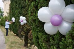 palloncini per addolcire i cipressi