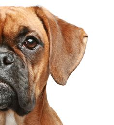 Why are skin allergies in dogs often misdiagnosed?