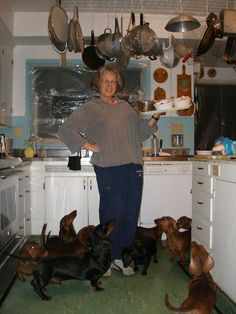 I kinda wish I had this many Dachshunds! but not the poop....ugg