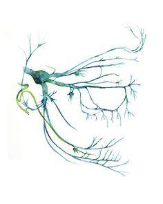 Nervio trigémino imprimir arte acuarela cabeza y por LyonRoad