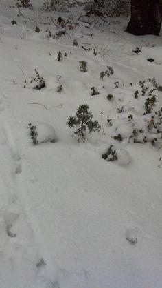 Snow on Figueroa.