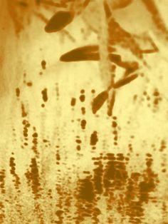 Fukusama - 2014 - digital media artwork by Ralph de Lange