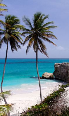 Tropical caribbean beach, http://www.exquisitecoasts.com/