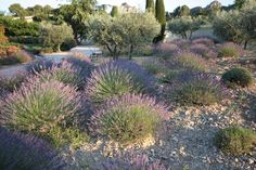 Loads of drought-tolerant planting and easy-maintenance to boot!