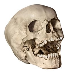 skull pictures to draw   Drawing Pics