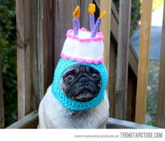 funny pug dog cake hat on imgfave- I have got to figure out how to make one of these!!