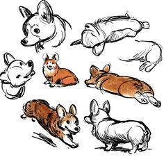 Corgi doodles/art