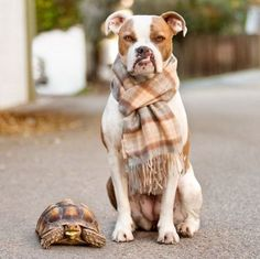 Meet Puka, a 4-year-old mixed breed with a cleft lip..and his pal Rocket Larry The Tortoise!
