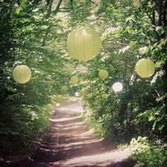 This was the path you had to drive up to get to our wedding location. Looked so dreamy with all the paper lanterns hanging in the trees :)