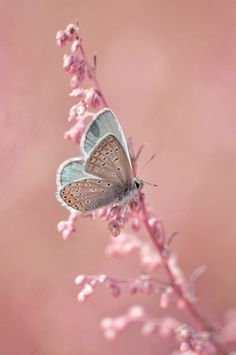 butterfly on a pink flower.this could inspire the most gorgeous bedroom design ever.does nature have a pantone color app? Jolie Photo, Color Of The Year, Beautiful Butterflies, Most Beautiful Flowers, Beautiful Birds, Animals Beautiful, Beautiful Things, Beautiful Creatures, Pink Butterfly