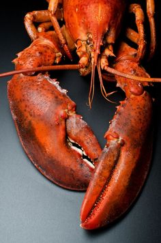 Want to learn how to cook lobster? We break down the process step by step and even include some homemade recipes to practice your new skills with! Shrimp And Lobster, Fish And Seafood, Lobster Tails, How To Cook Lobster, Shellfish Recipes, Crab Recipes, Healthy Eating Tips, Food Pictures, Food Art