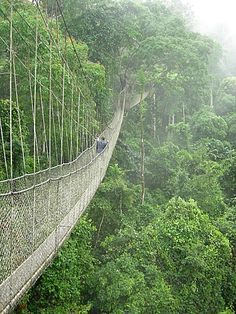 this is an extremely narrow rope bridge through kakum national park in ghana. it is  around 200 feet up in the air, winding around a small part of the rain forest. soooo much fun!!!!!
