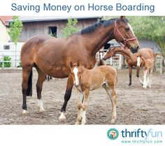 This is a guide about saving money on horse boarding. Boarding a horse can get expensive very quickly. Saving money on keeping your horse well cared for while you are away is an important part of budgeting for your pet.