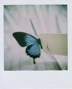 fandom inspiration: butterfly (Life is Strange) Photo Polaroid, Polaroid Pictures, Butterfly Effect, Blue Butterfly, Life Is Strange, Rachel Amber, Arcadia Bay, Chloe Price, Character Aesthetic