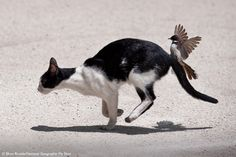 Angry Photography | This bird tries to chase a cat out of its territory. (Photo by Efren ...
