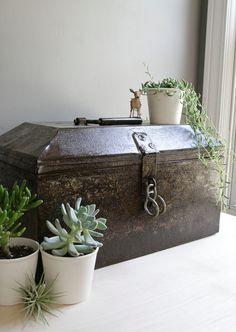 ceramic pot plants