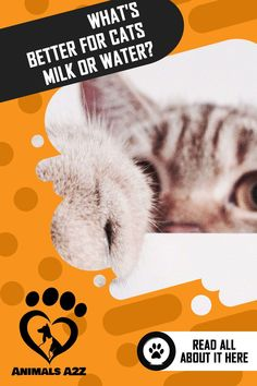 Unlike humans, our feline friends should only drink one thing, and that is water. Despite the popular belief of many people, milk is actually not good for cats. Information About Cats, Best Cat Food, Cat Drinking, All About Cats, Cat Facts, Cat Health, Cats And Kittens, Cute Cats, Milk