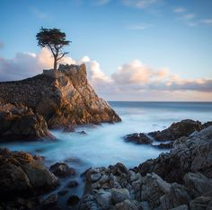 Lone Cypress stands along Drive in Monterey Bay, California Travel Insurance Quotes, Monterey Bay, Online Travel, California Dreamin', Pebble Beach, Cheap Travel, Trip Planning, Vacation, Adventure