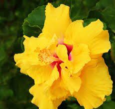 Resultado de imagen para flores exoticas
