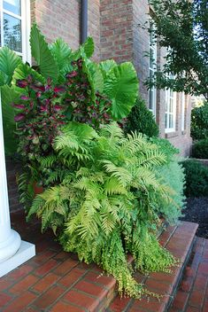 Large container garden | Lush green | Texture | Front entrance | Container planting