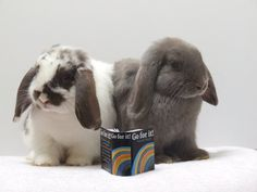 my cute pet bunnies Pet Lovers, Bunnies, Cool Photos, Cute Animals, Cool Stuff, Pets, Pretty Animals, Cool Things, Rabbits