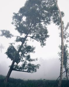 taken on of the morning watching the fog fall. This would have been  a good spot to watch it roll on.#instagram #photography #kerala #tips #diy #menfashion #vsco #fashion
