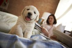 Putting your puppy on a regular sleep schedule will not only save your sanity -- dogs thrive on routine and your pup will appreciate the consistency. Prepare your pup for a sound night of sleep by adhering to a simple crate training schedule throughout the day. You'll be able to choose a bedtime that allows both you and your cuddly new friend to get some rest.