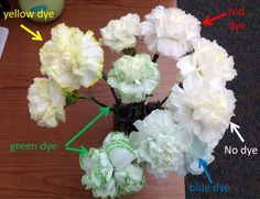 1000 images about how to dye flowers on pinterest dyes for Can you dye roses