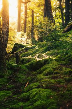 ~~my back yard~~~Forest Floor, New Brunswick, Canada photo via anna Fantasy Forest, Dark Forest, Beautiful World, Beautiful Places, Enchanted Wood, Moss Garden, Forest Floor, Walk In The Woods, Foto Art