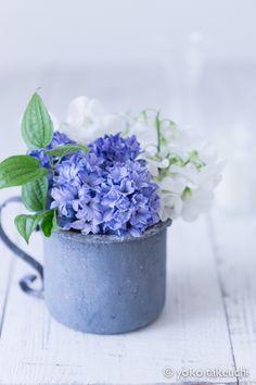 香り豊かな、ブルーヒヤシンス 毎日 * フラワーフォト