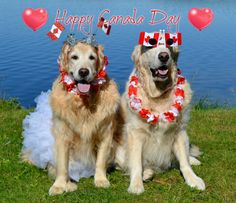 Happy Canada Day Wishes from Brie and Bentley