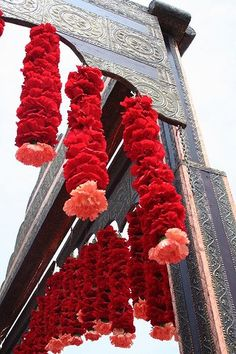 I always knew carnations could be beautiful!