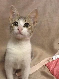 Frisquette Cat | Pawshake Winnipeg