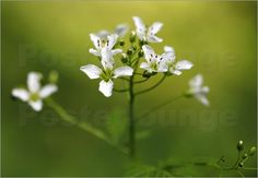 Poster Wiesenblumen