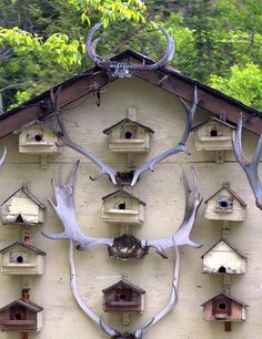 Antlers & Bird Houses | Flickr - Photo Sharing!